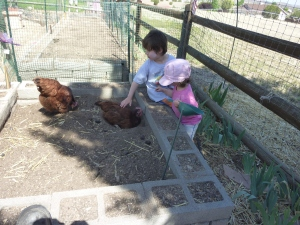 Petting the chickens!