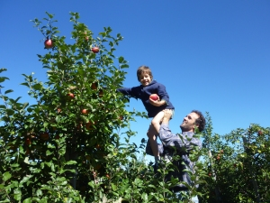More apple picking fun!